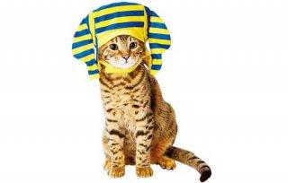 猫用変身ほっかむりファラオ/ペティオ