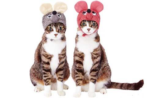猫用変身ほっかむりネズミ(マウス)セット/ペティオ