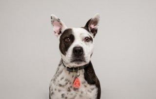 TICKLESS(チックレス) PET