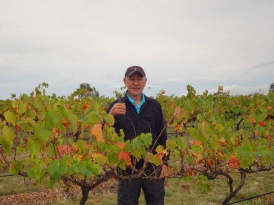 2012年3月16日レッドバンク・ワイナリーのブドウ摘み