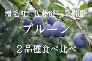 増毛産 プルーン2品種 食べ比べセット