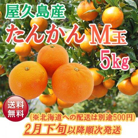 <予約受付中>たんかんM玉 5kg