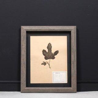 アンティーク  押し花 植物標本 1928年代 フランス(フレームセット / 額装 ヘリンボーン柄)