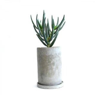 アロエ ラモシシマ Aloe ramosissima