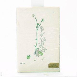 アンティーク  オリジナルカラープリント ボタニカルアート 1880年代 イギリス(559)