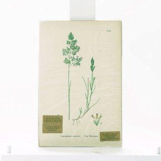 アンティーク  オリジナルカラープリント ボタニカルアート 1880年代 イギリス(1729)