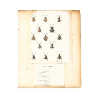 昆虫 ヴィンテージ アート