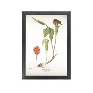 1924年代 アメリカ アンティーク ボタニカル アート 植物画 武蔵鐙 フレームセット