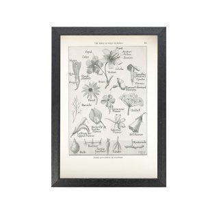1924年代 アメリカ アンティーク ボタニカル アート 植物画 モノクロ フレームセット