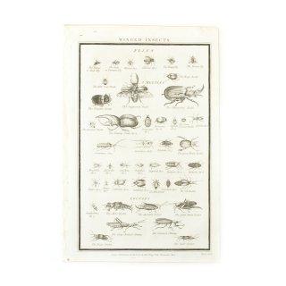 アンティーク 昆虫 アート プリント イギリス