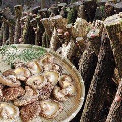 熊本・大分県産 原木どんこ 乾しいたけ80g 送料無料 3袋購入で1袋おまけ 代引不可