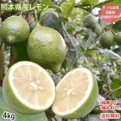 レモン 国産レモン 送料無料 4kg S〜L 3箱購入で1箱おまけ 熊本県産 減農薬 防腐剤ワックス不使用 れもん グリーンレモン 国産