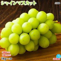 シャインマスカット ぶどう 送料無料 1kg 2〜3房 熊本県産 3箱購入で1箱おまけ マスカット 葡萄 ブドウ