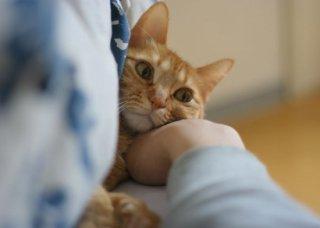 VSW情報センター 〜人の社会福祉における動物のいちづけ〜 ニュースレター Vol. 1