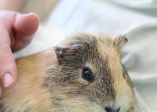 VSW情報センター 〜人の社会福祉における動物のいちづけ〜 ニュースレター Vol. 2