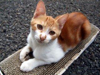 動物虐待への暴露が及ぼす影響