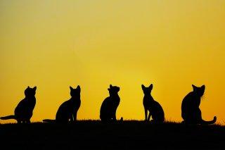 アニマル・ホーディング:  動物と人間の課題への対応