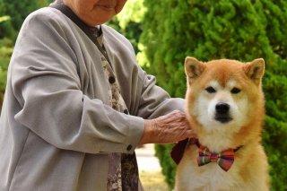 VSW情報センター 〜人の社会福祉における動物のいちづけ〜 ニュースレター Vol. 11
