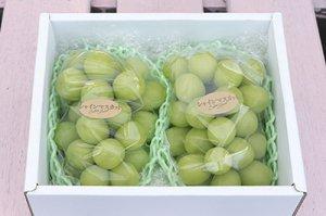 シャインマスカット【2房】1.3kg 大粒で甘みが強く、皮ごと食べれる種なし人気品種