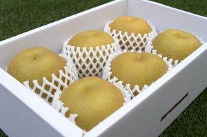 梨【大玉5〜6個】3kg  大きい梨は食べ応えがあります