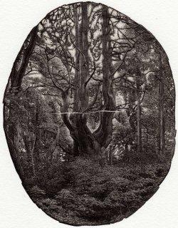 齋藤 僚太 木口木版画「森は静かに語る」サイン入り