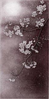 長野 順子 銅版画「桜月夜」額装品   サイン入り
