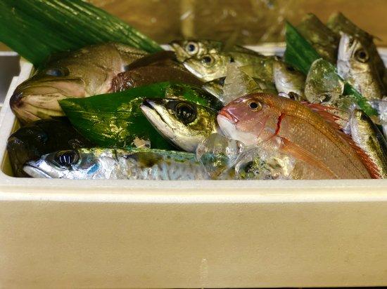定置網直送 地元の地魚セット
