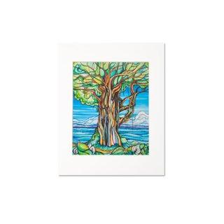 Enchanted Banyan(マットプリント)11×14
