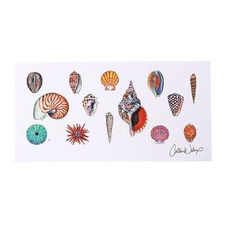 【日本限定モデル】ポストカードC(Sea Shells)