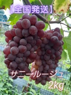 サニールージュ【種なし】 2kg箱(4〜6房)