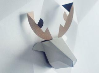 head box deer / シカ