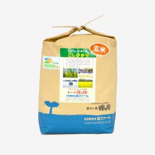 スプリングライス こしひかり(玄米) 5kg