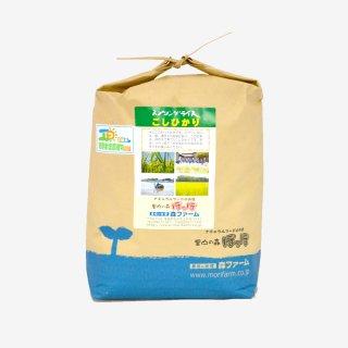 スプリングライス こしひかり(無洗米) 5kg