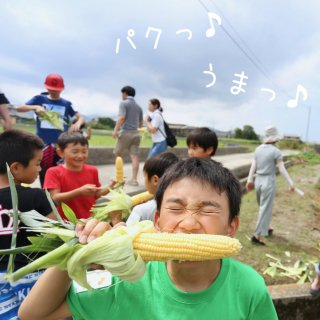 mama-yasai トウモロコシ 10本セット【ちょぴり個性派トウモロコシ応援セット】【完熟たまねぎ1kgプレゼント♪】