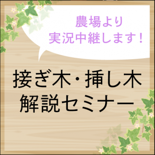 接ぎ木解説セミナー【バラの切り接ぎ作業実況】