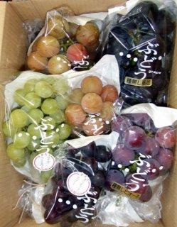 ご家庭用品種お任せ旬葡萄詰合せ 約2kg 9月7日頃までのお届け分
