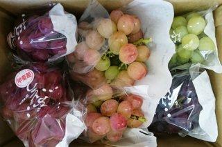 ご家庭用品種お任せ旬葡萄詰合せ 約4kg 9月8日頃から9月下旬お届け分