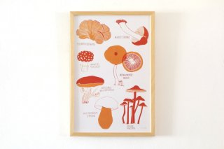 Claudia Pearson / Mushrooms