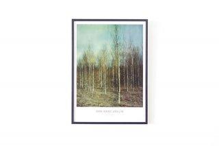 Dan Isaac Wallin / BIRCHES 700 × 500