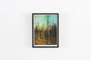 Dan Isaac Wallin / BIRCHES -small-