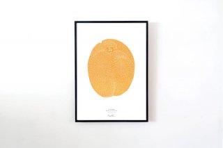 "Monika Petersen / ""Apricot"" POSTER 700 × 500 mm"