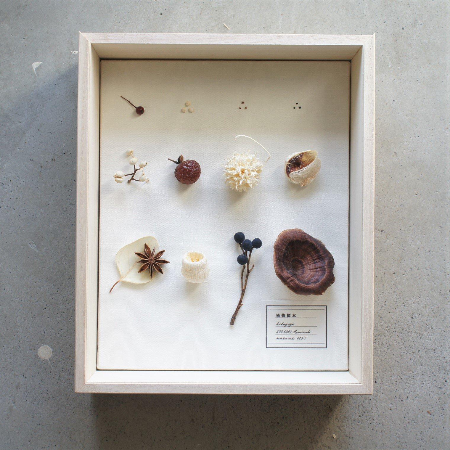 植物標本・木製BOX(キノコ)