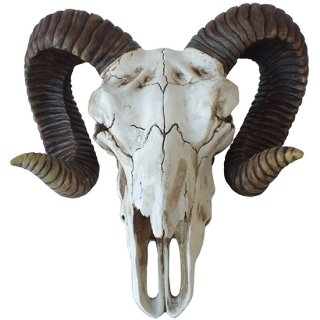 ラムスカル(雄羊の頭蓋骨)ウォールフィギュア Ram Skull Wall Decoration