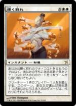 輝く群れ/Shining Shoal(BOK)【日本語】