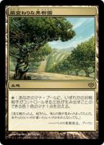 風変わりな果樹園/Exotic Orchard(CON)【日本語】