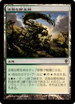 活発な野生林/Stirring Wildwood(WWK)【日本語】