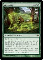 熊の陰影/Bear Umbra(ROE)【日本語】
