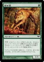 若き狼/Young Wolf(DKA)【日本語】