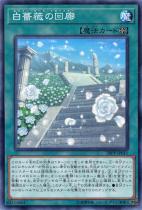 白薔薇の回廊【ノーマル】20PP-JP011