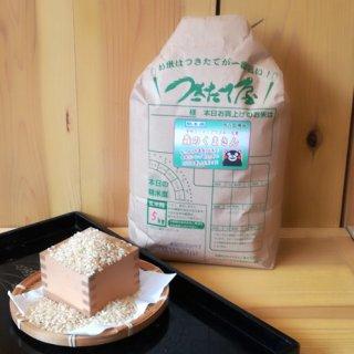 【29年産】<br>熊本県産<br>森のくまさん 5kg